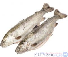 Форель радужная 250-300 гр