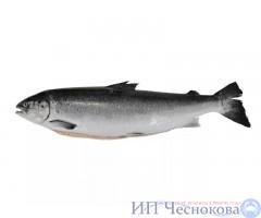 Сёмга (лосось) с/г 3-4