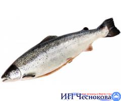 Сёмга (лосось) с/г 7-8