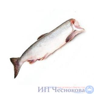 Горбуша ПБГ
