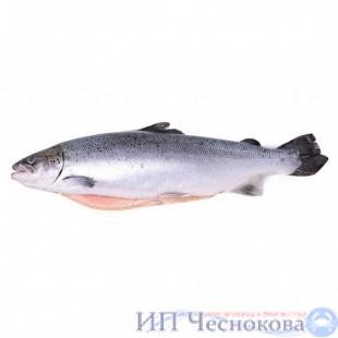 Сёмга (лосось) с/г 5-6