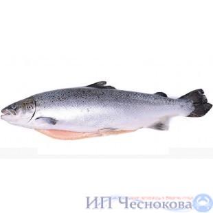 Сёмга (лосось) с/г 6-7